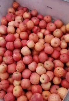 紅富士蘋果 正宗紅富士