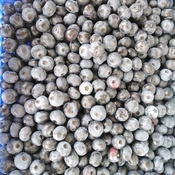 蓝莓南高丛蓝莓  速冻