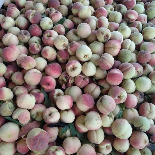 山東省德州市陵城區映霜紅蜜桃 55mm以上 4兩以上