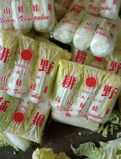河南省周口市太康縣小娃娃菜 4~5兩以上
