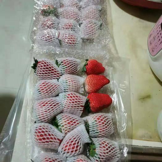 遼寧省丹東市鳳城市 遼寧丹東草莓