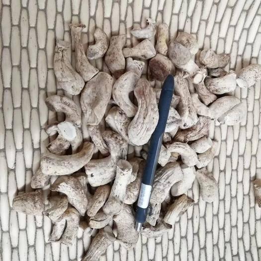 陜西省商洛市商南縣香菇腳 精選雙剪菇腳新貨上市 產地直銷 陜西綠昌隆農產品有限公司