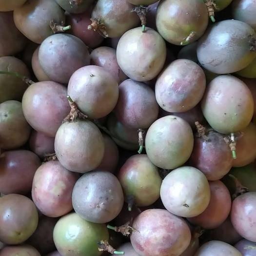 廣西壯族自治區玉林市容縣 新鮮百香果