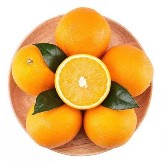 福建省寧德市壽寧縣贛南臍橙 壽寧鋅橙 高山臍橙 原生態臍橙開始采摘