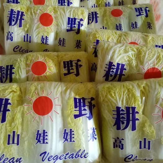 河南省濮陽市清豐縣 精品娃娃菜 黃心、硬貨、保證質量、歡迎全國老板訂購