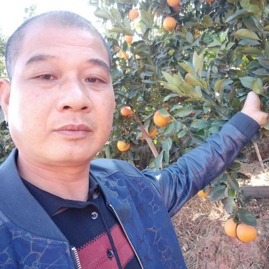 江西省贛州市寧都縣 贛南臍橙大量供應需要的跟我聯系