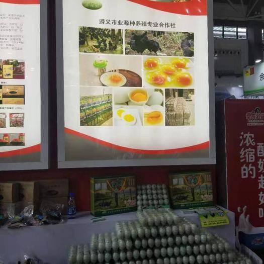 貴州省遵義市紅花崗區 綠殼雞蛋
