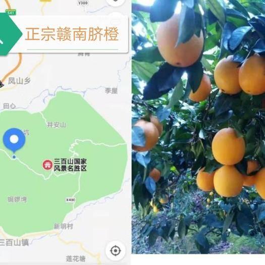 江西省贛州市安遠縣 正宗贛南臍橙5斤裝包郵支持一件代發