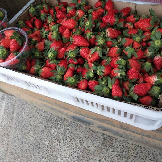 江西省南昌市青山湖區 新上市奶油草莓
