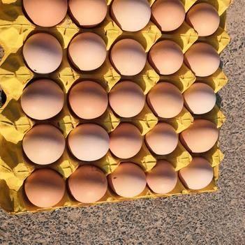 源厂精品土鸡蛋,360枚净40斤