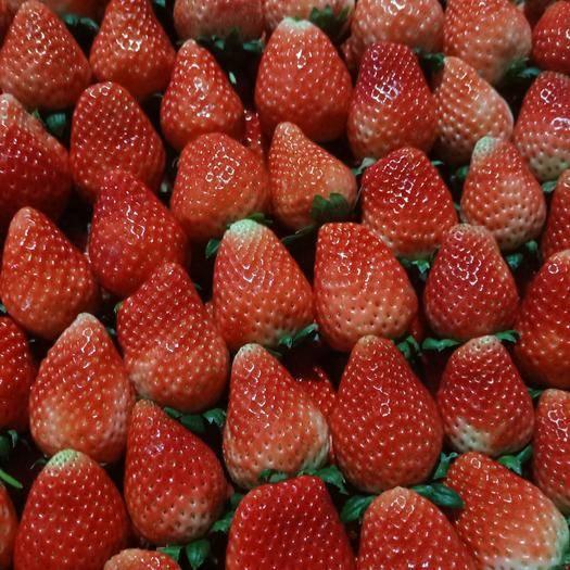 江蘇省徐州市邳州市 妙香草莓