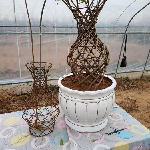 河南省南陽市方城縣造型石榴樹 牡丹石榴花瓶精品造型 骨架生產 適合庭院裝飾園林景區綠化