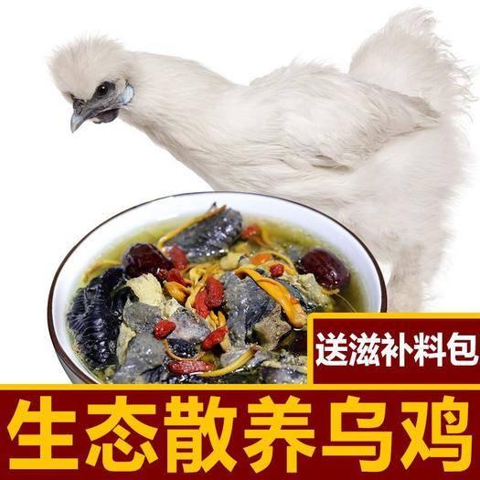 江苏省徐州市新沂市 (亏促)高山散养纯乌骨鸡乌鸡草鸡土鸡老母鸡现杀发货