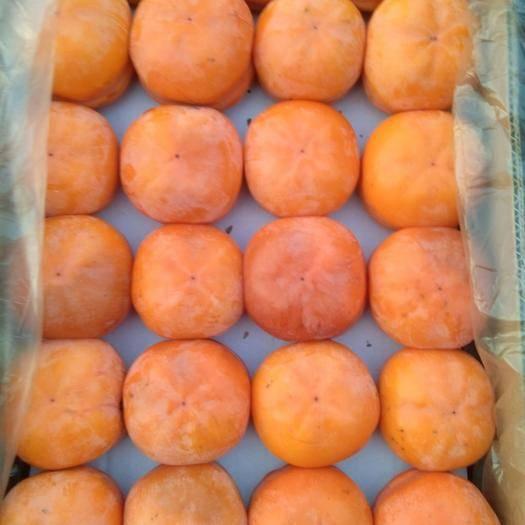 河北省保定市順平縣磨盤柿子 4 - 5兩以上