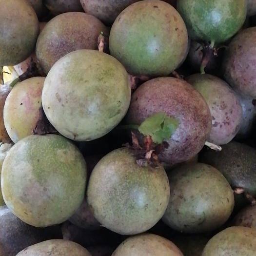 廣西壯族自治區玉林市興業縣 廣西六萬大山種植的百香果—紫香、臺農