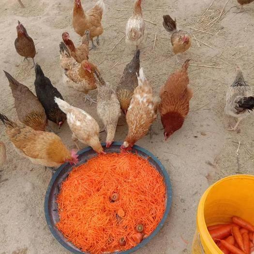 山西省長治市武鄉縣 武鄉散養笨雞蛋,純天然,不喂飼料