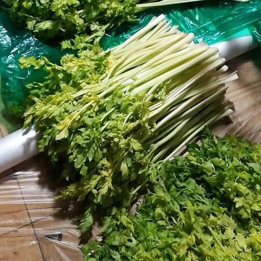山東省青島市平度市 芹菜芯,二梗大量供應,春節送禮佳品