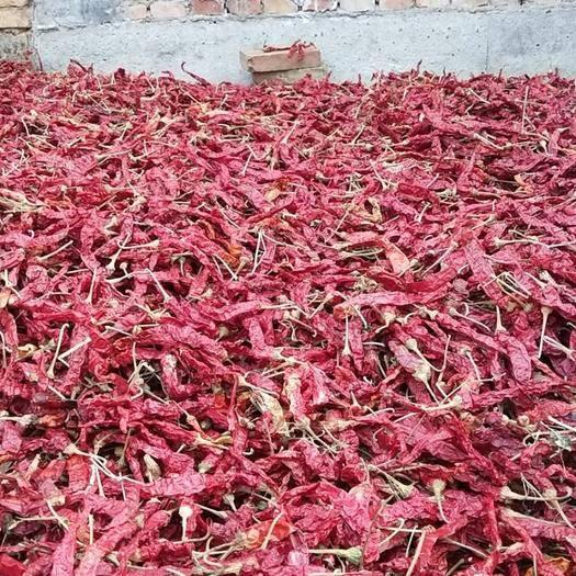 陜西省渭南市臨渭區長角辣椒 混裝通貨 中辣 紫紅