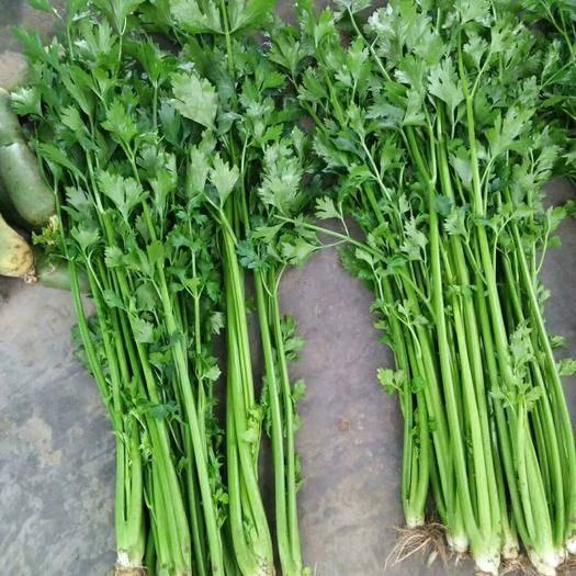 山東省青島市萊西市 金口芹菜,自己家大棚種植。地頭價沒有任何附加費