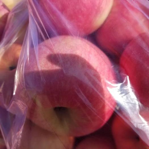 內蒙古自治區赤峰市松山區 寒富蘋果
