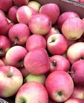 丹霞蘋果 65mm以上 條紅 光果