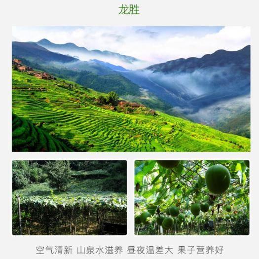 廣西壯族自治區桂林市龍勝各族自治縣 低溫脫水羅漢果