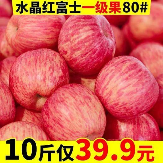 陜西省咸陽市乾縣 陜西富士蘋果新鮮10斤75-80整箱18個24個,產地直發