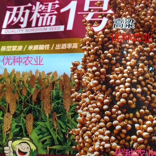 湖南省長沙市芙蓉區紅高粱種 兩糯1號,2020年高粱訂單種植。