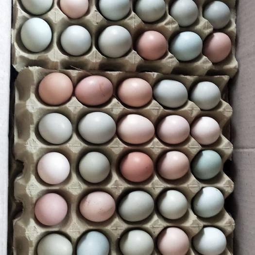 湖北省荊門市鐘祥市土雞蛋 散養,主食玉米,南瓜,稻谷,蟲草,原生態散養蛋