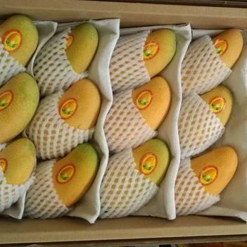 海南特大芒果水仙金煌 当季新鲜水果青皮三亚芒果大青芒