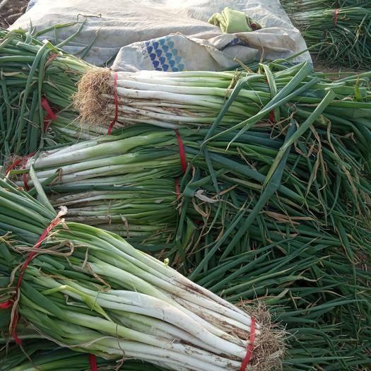 河南省駐馬店市上蔡縣 上蔡縣邵店鎮產香蔥故地品質好味美歡迎全國客戶采購。