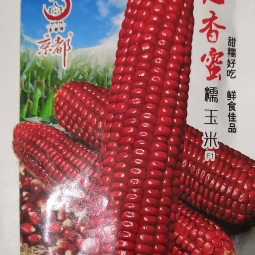 河南省南陽市臥龍區 紅香蜜糯玉米種子 紅香蜜糯玉米 老品種 非轉基因 養生佳品