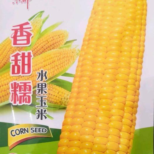 河南省南陽市臥龍區水果玉米種子 香甜糯水果玉米50g/袋