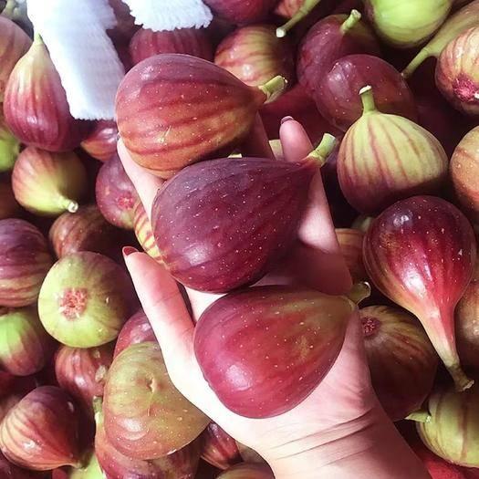 四川省成都市雙流區 新鮮無花果,5斤裝,凈重3斤,通貨