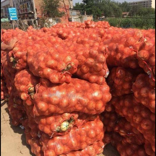 山東省濟寧市金鄉縣 金鄉大量黃皮洋蔥機簍子6~9,量大優惠