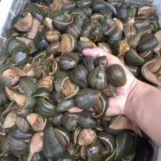 吉林省长春市绿园区 水蛭养殖
