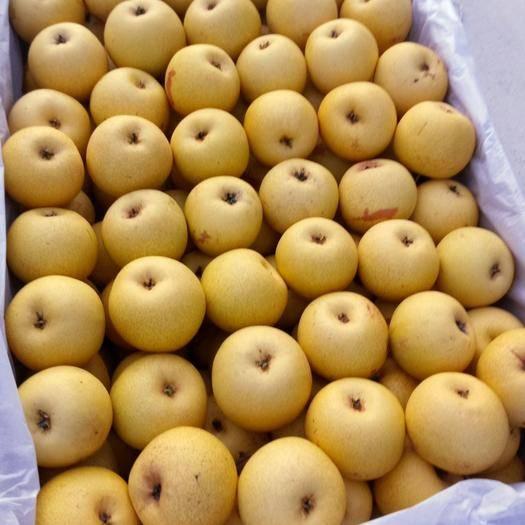 遼寧省錦州市北鎮市其它瓜果 出售各種水果,價格便宜。歡迎前來購買。