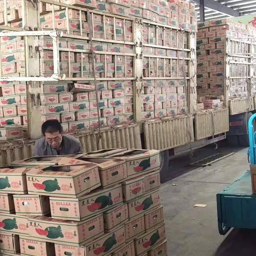 云南省紅河哈尼族彝族自治州蒙自市黑美人西瓜 精品越南黑美人,貨源穩定,量大,可到基地看貨