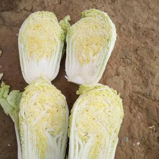 河南省漯河市舞陽縣 精品娃娃菜,自己家種的,多的話可以便宜