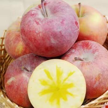正宗阿克蘇冰糖心蘋果有需要的聯系