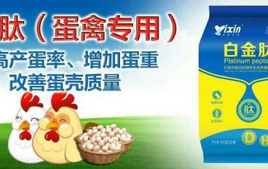 上海市閔行區蛋禽飼料添加劑 蛋禽專用白金肽提高產蛋率,減少疾病