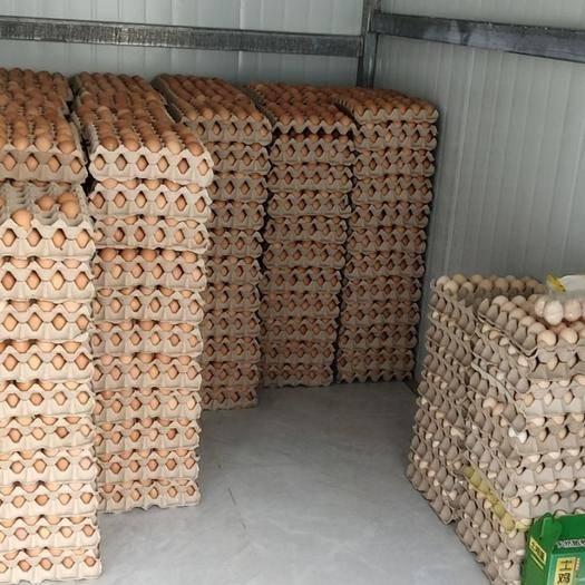 陜西省渭南市臨渭區普通雞蛋 食用 散裝