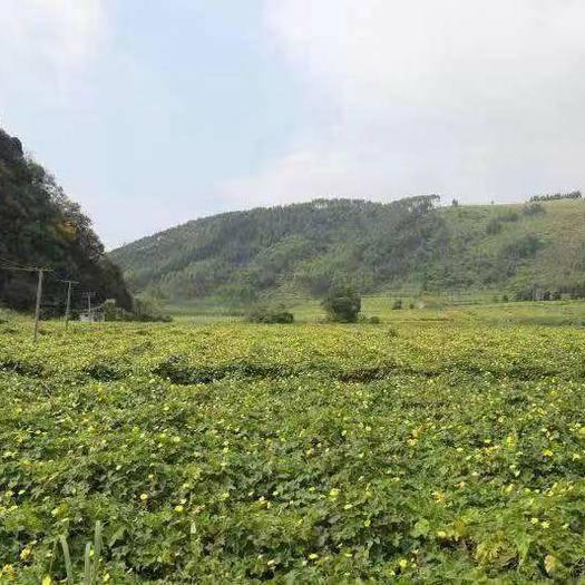 廣西壯族自治區柳州市柳北區絲瓜絡 混裝通貨
