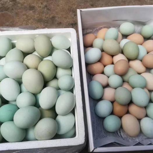 云南省玉溪市新平彝族傣族自治縣 山上放養的綠殼雞蛋