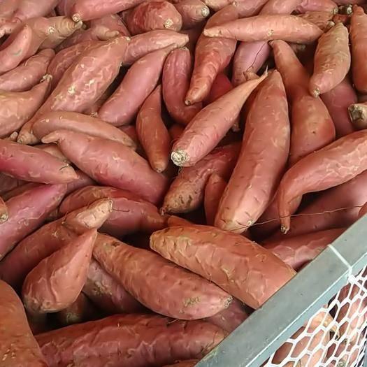 河北省滄州市河間市 紅薯煙25