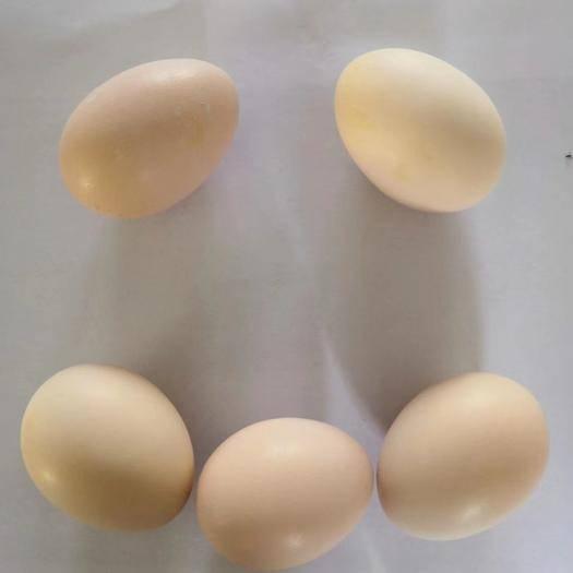 安徽省亳州市譙城區 農村原生態土雞蛋