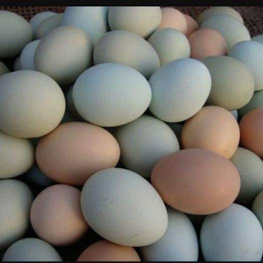 安徽省銅陵市郊區 曉田園散養土雞蛋