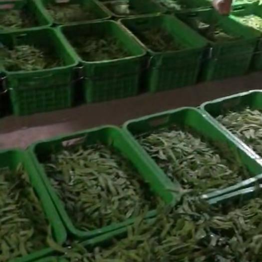 云南省普洱市景東彝族自治縣 綠色食品荷蘭豆