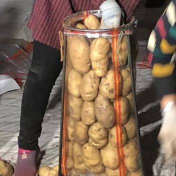 荷兰15号土豆 荷兰十五,川引,希森V6,3两通天