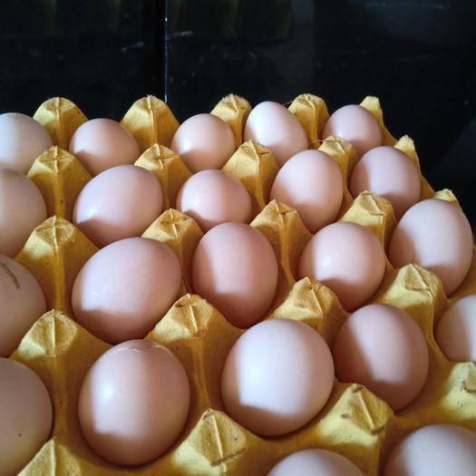 云南省昆明市宜良縣土雞蛋 放養土雞